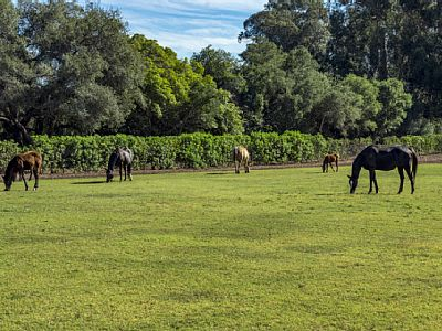 The guesthouse is right next to the stables so it's highly likely you will run into some horses.